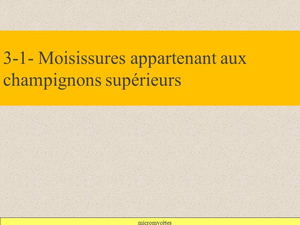 micromycètes 3-1- Moisissures appartenant aux champignons supérieurs
