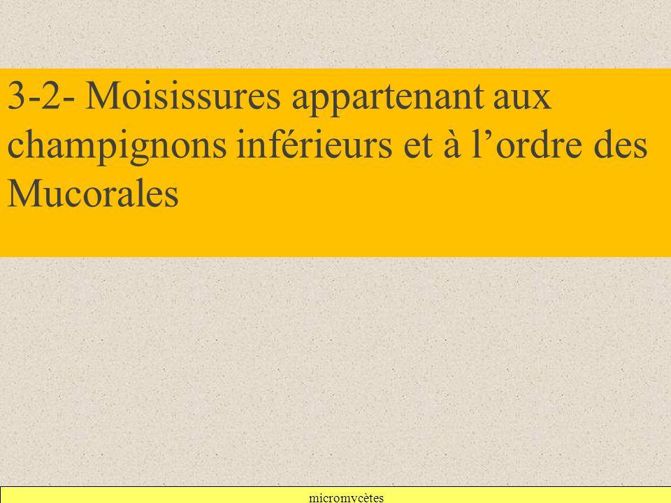 micromycètes 3-2- Moisissures appartenant aux champignons inférieurs et à l'ordre des Mucorales