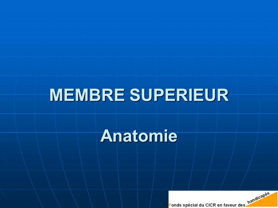 MEMBRE SUPERIEUR Anatomie