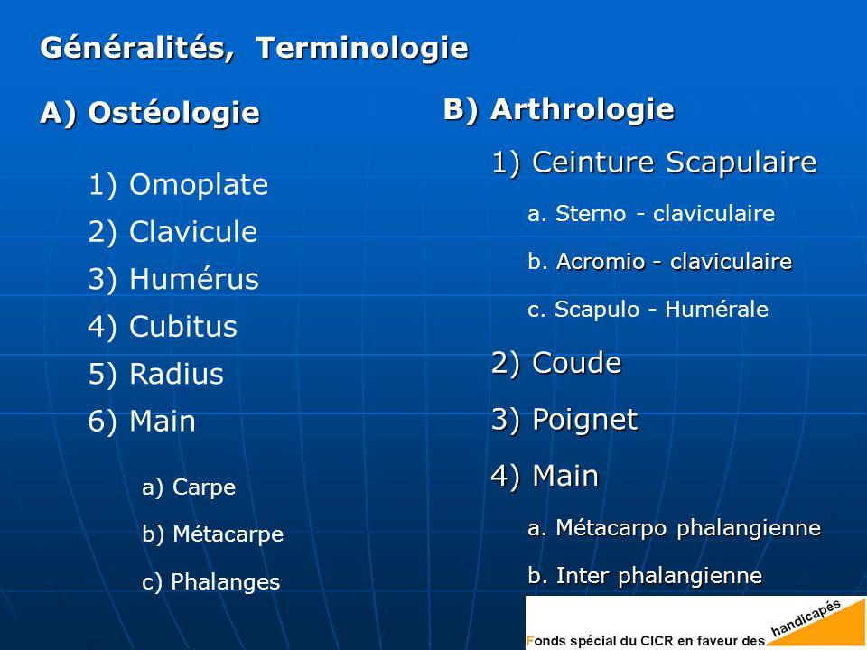 Généralités, Terminologie 4) Main 3) Poignet 2) Coude 1) Ceinture Scapulaire B) Arthrologie A) Ostéologie 1) Omoplate 2) Clavicule 3) Humérus 4) Cubitus 5) Radius 6) Main b) Métacarpe c) Phalanges a.