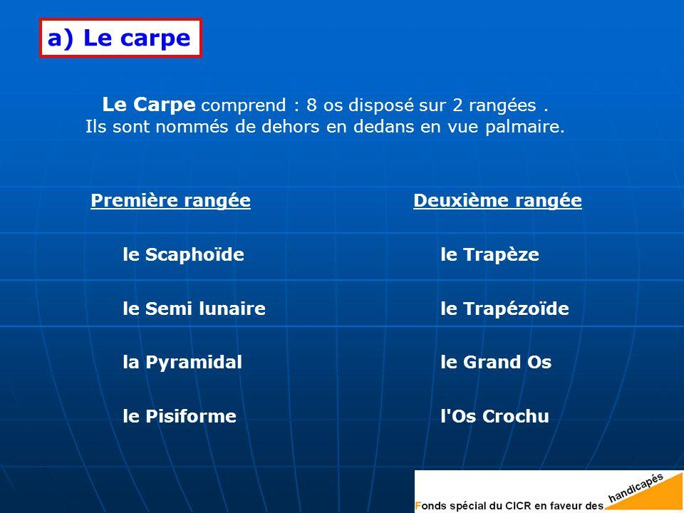 a) Le carpe Le Carpe comprend : 8 os disposé sur 2 rangées.