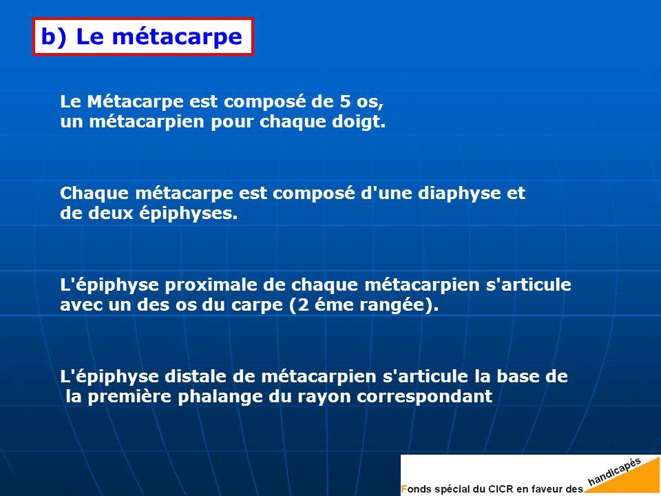 Le Métacarpe est composé de 5 os, un métacarpien pour chaque doigt.