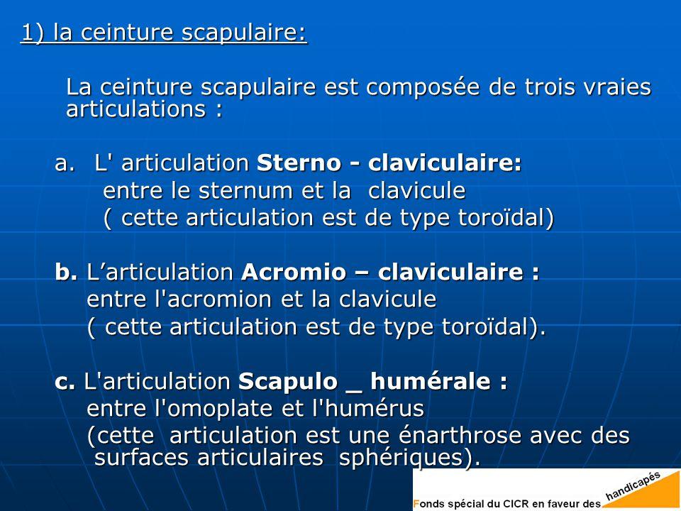 1) la ceinture scapulaire: La ceinture scapulaire est composée de trois vraies articulations : a.L articulation Sterno - claviculaire: entre le sternum et la clavicule entre le sternum et la clavicule ( cette articulation est de type toroïdal) ( cette articulation est de type toroïdal) b.