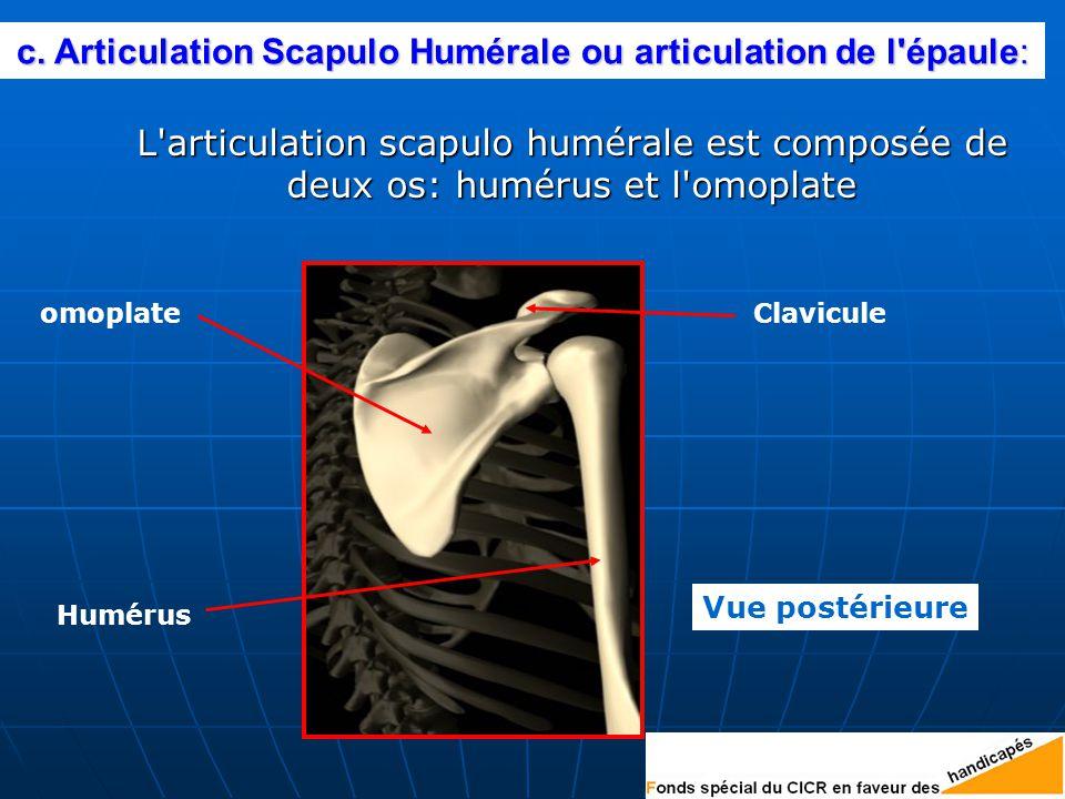 L articulation scapulo humérale est composée de deux os: humérus et l omoplate L articulation scapulo humérale est composée de deux os: humérus et l omoplate omoplate Humérus Clavicule Vue postérieure c.