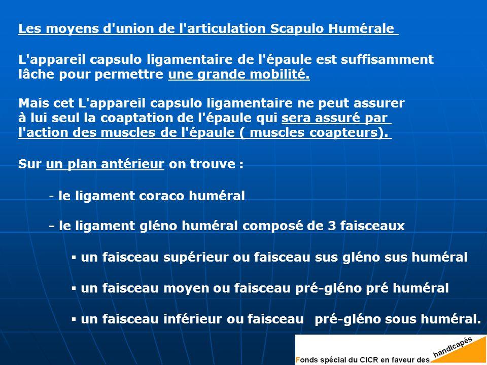 Les moyens d union de l articulation Scapulo Humérale L appareil capsulo ligamentaire de l épaule est suffisamment lâche pour permettre une grande mobilité.