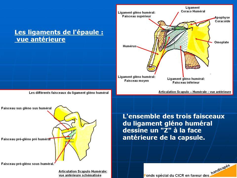 Les ligaments de l épaule : vue antérieure L ensemble des trois faisceaux du ligament gléno huméral dessine un Z à la face antérieure de la capsule.