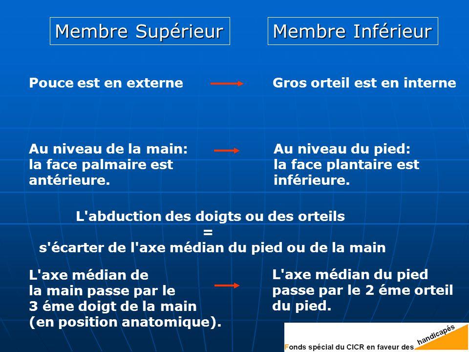 Membre Supérieur Membre Inférieur Pouce est en externeGros orteil est en interne Au niveau de la main: la face palmaire est antérieure.