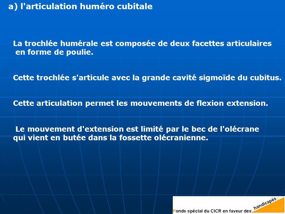 a) l articulation huméro cubitale La trochlée humérale est composée de deux facettes articulaires en forme de poulie.