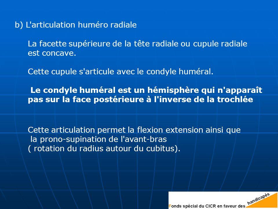 b) L articulation huméro radiale La facette supérieure de la tête radiale ou cupule radiale est concave.