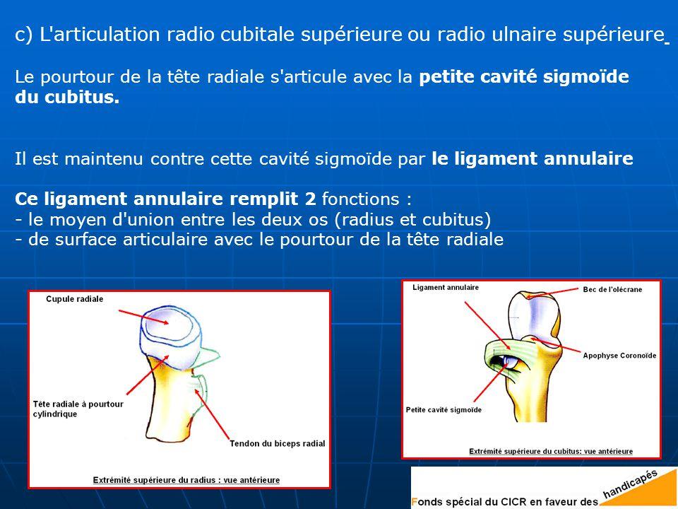 c) L articulation radio cubitale supérieure ou radio ulnaire supérieure Le pourtour de la tête radiale s articule avec la petite cavité sigmoïde du cubitus.