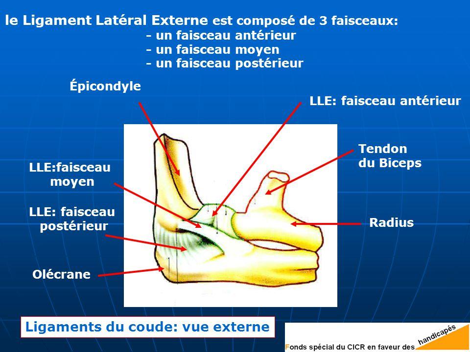 le Ligament Latéral Externe est composé de 3 faisceaux: - un faisceau antérieur - un faisceau moyen - un faisceau postérieur Épicondyle LLE:faisceau moyen LLE: faisceau postérieur LLE: faisceau antérieur Olécrane Radius Tendon du Biceps Ligaments du coude: vue externe