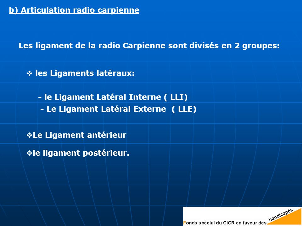 Les ligament de la radio Carpienne sont divisés en 2 groupes:  Le Ligament antérieur  le ligament postérieur.