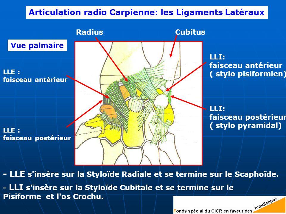 LLE : faisceau antérieur LLE : faisceau postérieur RadiusCubitus Articulation radio Carpienne: les Ligaments Latéraux LLI: faisceau antérieur ( stylo pisiformien) LLI: faisceau postérieur ( stylo pyramidal) Vue palmaire - LLE s insère sur la Styloïde Radiale et se termine sur le Scaphoïde.