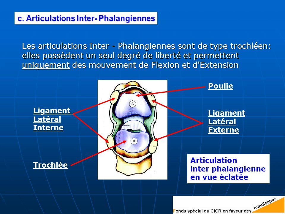 Les articulations Inter - Phalangiennes sont de type trochléen: elles possèdent un seul degré de liberté et permettent uniquement des mouvement de Flexion et d Extension c.