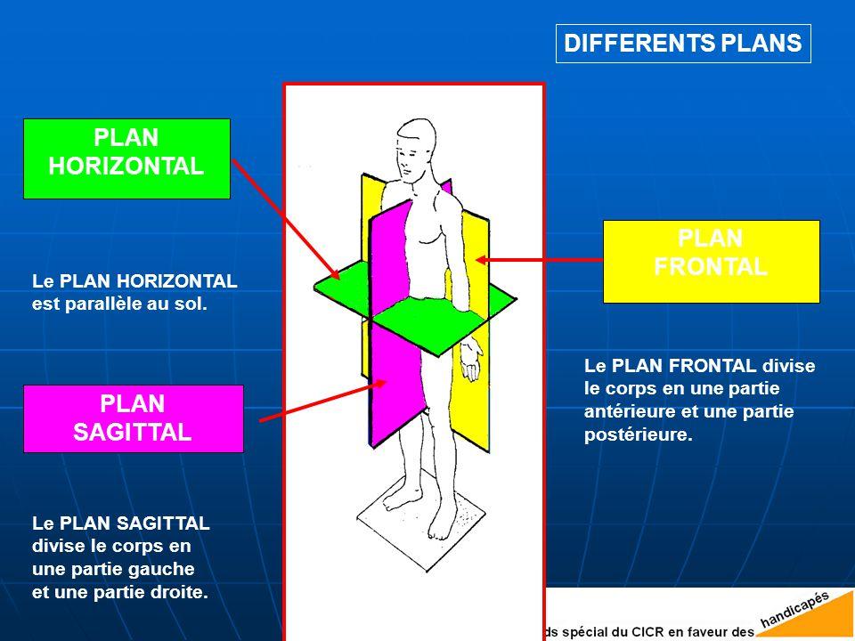 DIFFERENTS PLANS Le PLAN FRONTAL divise le corps en une partie antérieure et une partie postérieure.