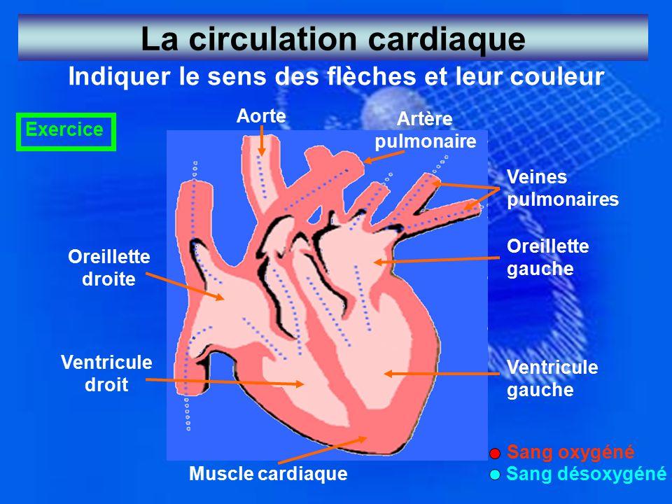 La circulation cardiaque Indiquer le sens des flèches et leur couleur Aorte Oreillette droite Ventricule droit Muscle cardiaque Artère pulmonaire Vein