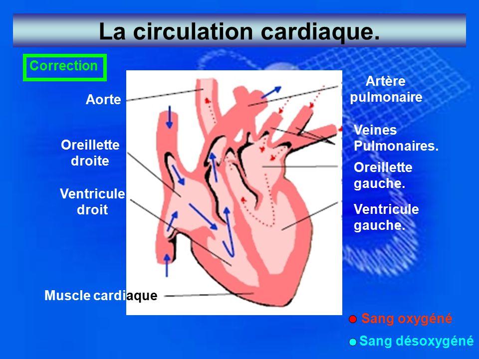 La circulation cardiaque. Correction Aorte Oreillette droite Ventricule droit Muscle cardiaque Artère pulmonaire Veines Pulmonaires. Oreillette gauche