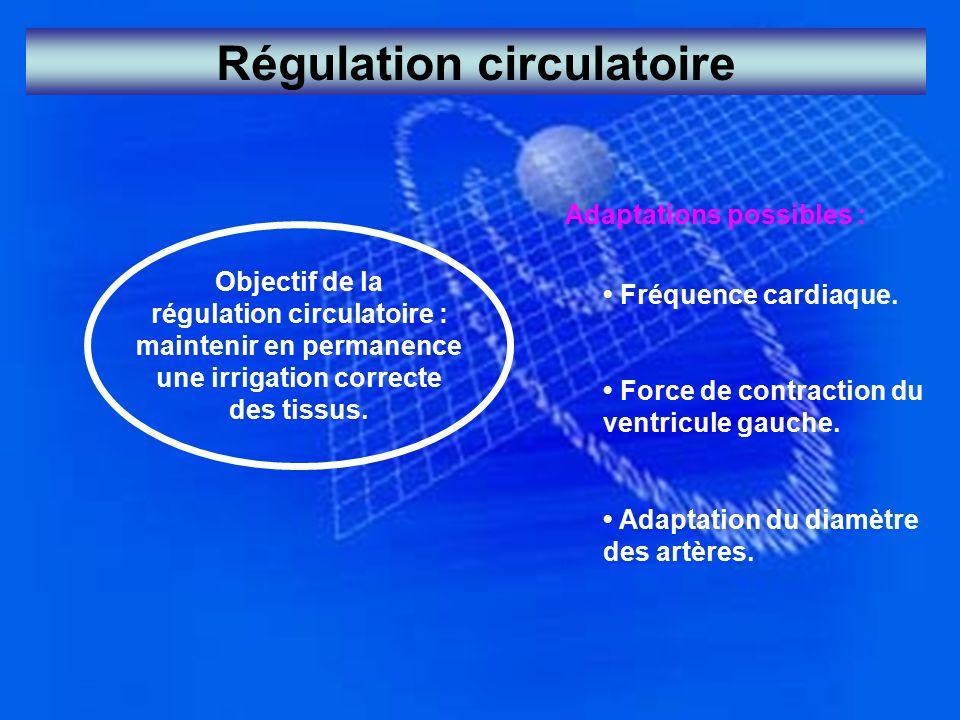 Régulation circulatoire Objectif de la régulation circulatoire : maintenir en permanence une irrigation correcte des tissus. Adaptations possibles : F