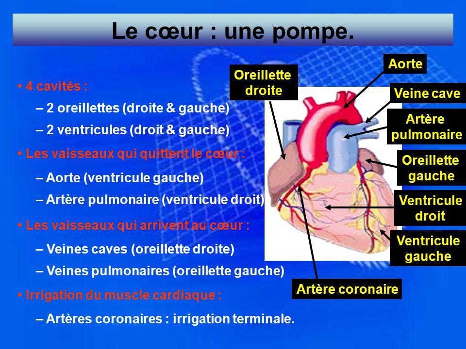 Le cœur : une pompe. 4 cavités : – 2 oreillettes (droite & gauche) – 2 ventricules (droit & gauche) Les vaisseaux qui quittent le cœur : – Aorte (vent