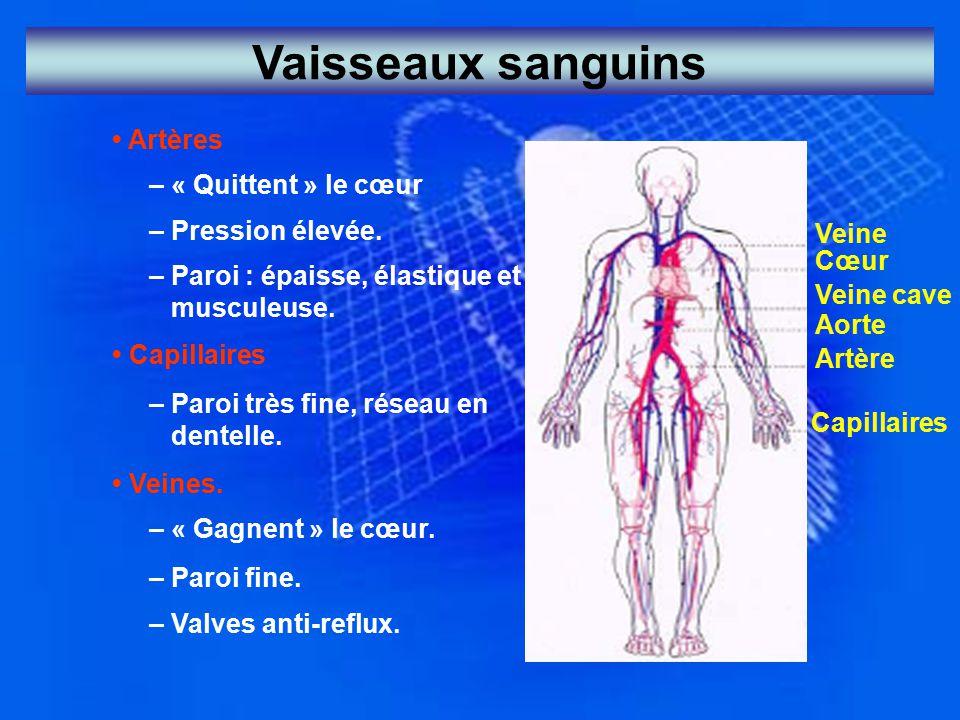 Vaisseaux sanguins Artères – « Quittent » le cœur – Pression élevée. – Paroi : épaisse, élastique et musculeuse. Capillaires – Paroi très fine, réseau