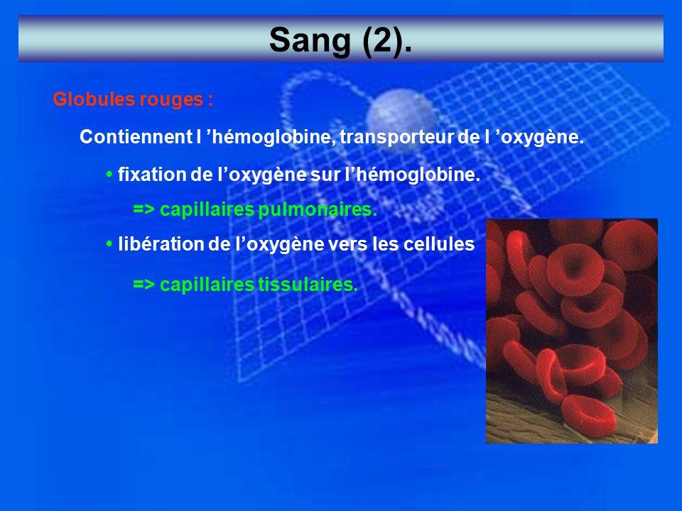 Sang (2). Globules rouges : Contiennent l 'hémoglobine, transporteur de l 'oxygène. fixation de l'oxygène sur l'hémoglobine. => capillaires pulmonaire