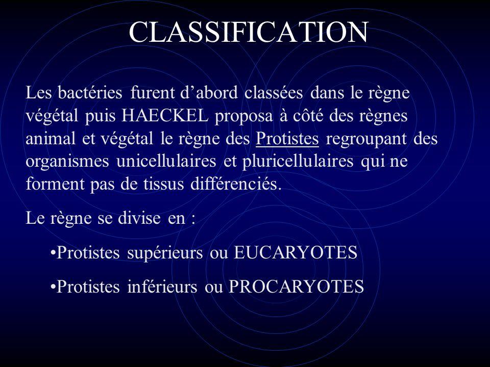 Protistes supérieurs ou EUCARYOTES (algues, protozoaires, champignons) Du grec eu, vrai et caryon, noyau Possédant un noyau entouré d'une membrane, de nombreux chromosomes et un appareil de mitose analogue à celui des animaux et des végétaux
