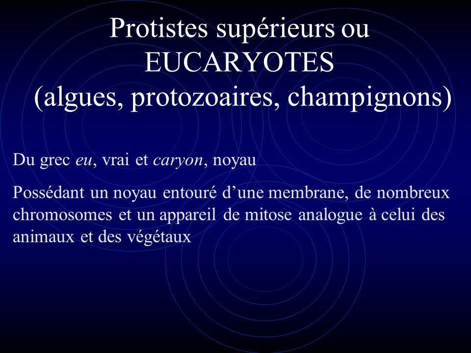 Protistes inférieurs ou PROCARYOTES (bactéries, algues bleues ) Du grec pro, avant et caryon, noyau Petites cellules dont le « noyau » est constitué d'un chromosome unique et est dépourvu de membrane.