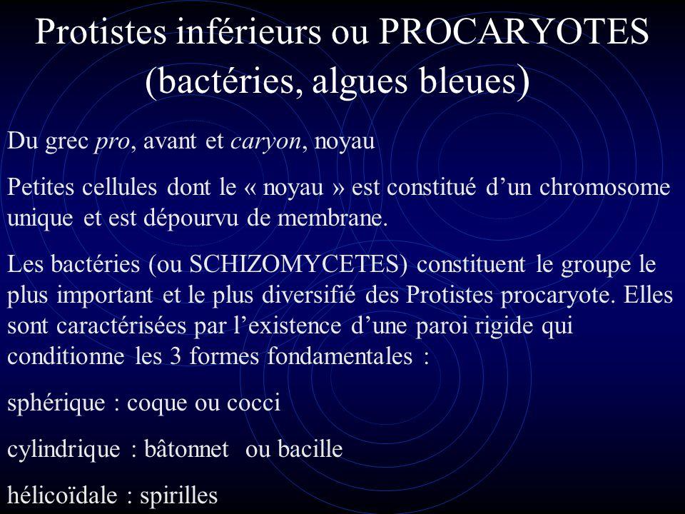ROLE DES BACTERIES DANS LA NATURE Le monde bactérien comprend un très grand nombre d'espèces et seules quelques- unes sont responsables de maladies humaines.