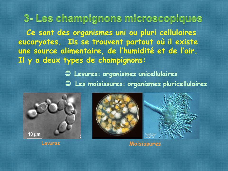 Ce sont des organismes uni ou pluri cellulaires eucaryotes.