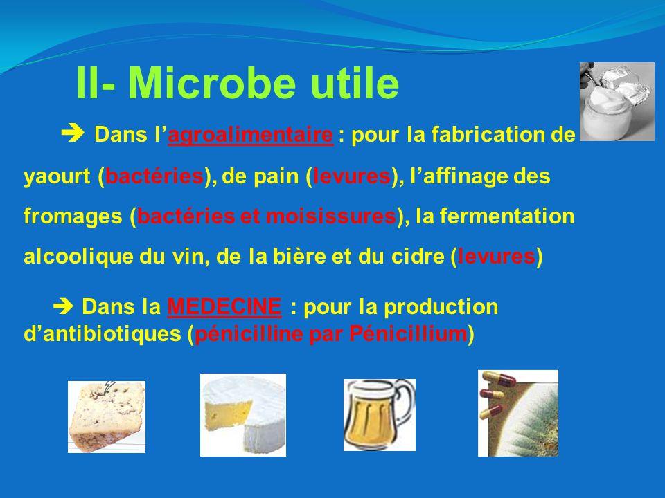  Dans l'agroalimentaire : pour la fabrication de yaourt (bactéries), de pain (levures), l'affinage des fromages (bactéries et moisissures), la fermentation alcoolique du vin, de la bière et du cidre (levures)  Dans la MEDECINE : pour la production d'antibiotiques (pénicilline par Pénicillium) II- Microbe utile