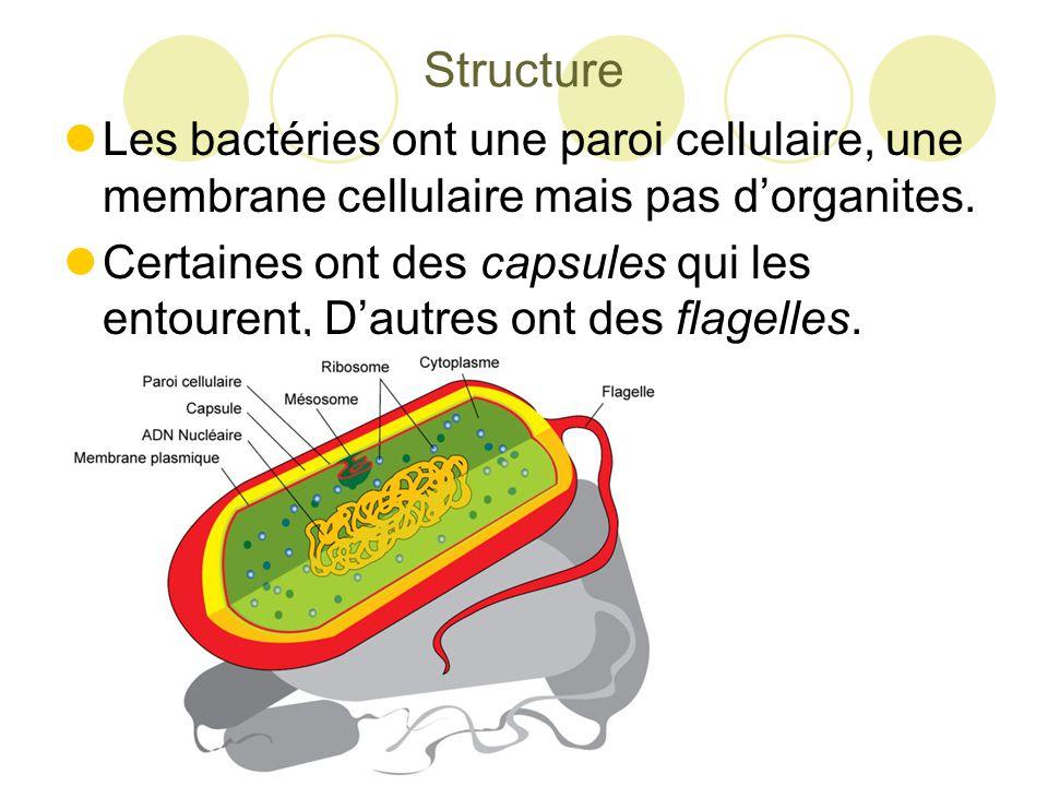 Les Archéobacteries  Ces bactéries sont expertes des environnements hostiles.