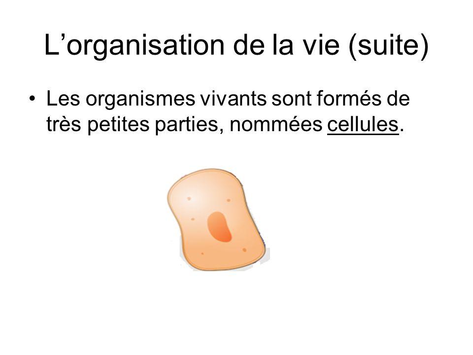 L'organisation de la vie (suite) Les organismes vivants sont formés de très petites parties, nommées cellules.