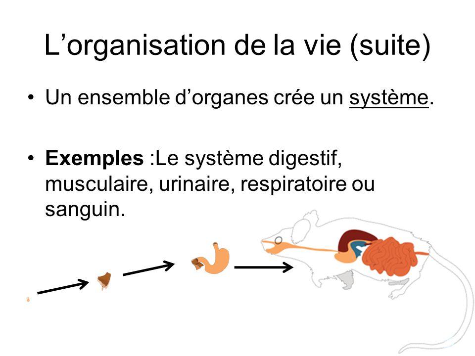 L'organisation de la vie (suite) Un ensemble d'organes crée un système. Exemples :Le système digestif, musculaire, urinaire, respiratoire ou sanguin.