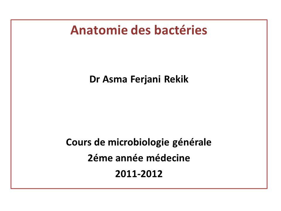 Anatomie des bactéries Dr Asma Ferjani Rekik Cours de microbiologie générale 2éme année médecine 2011-2012