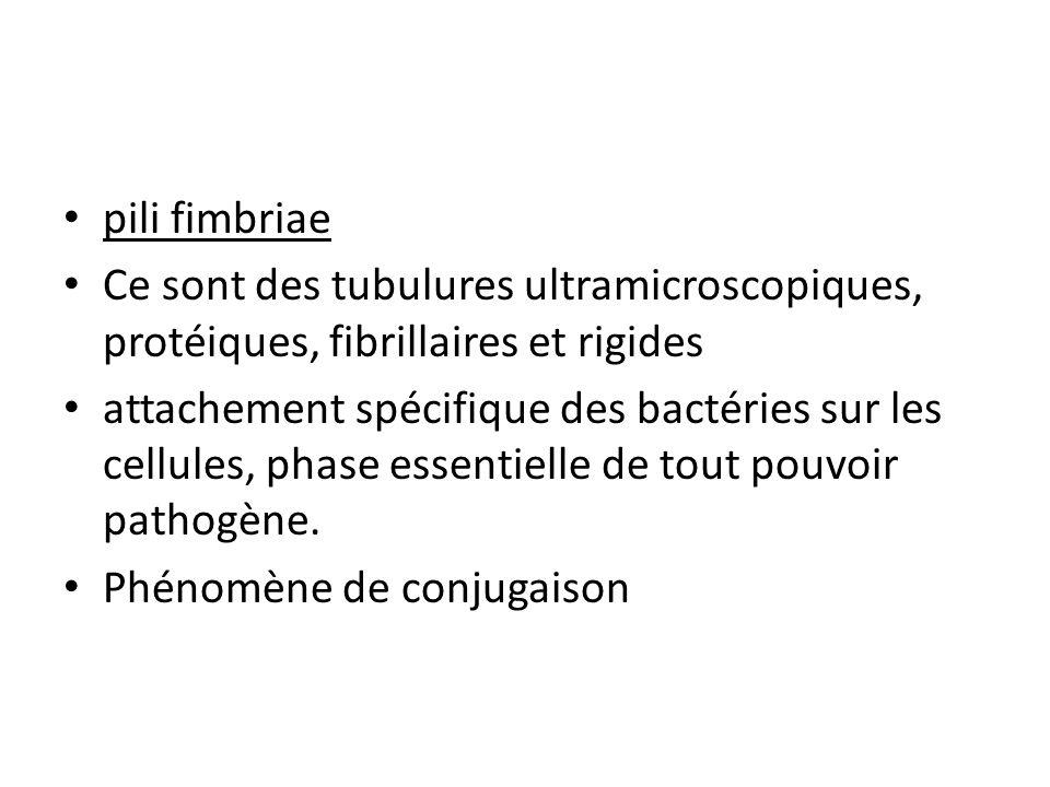 pili fimbriae Ce sont des tubulures ultramicroscopiques, protéiques, fibrillaires et rigides attachement spécifique des bactéries sur les cellules, phase essentielle de tout pouvoir pathogène.