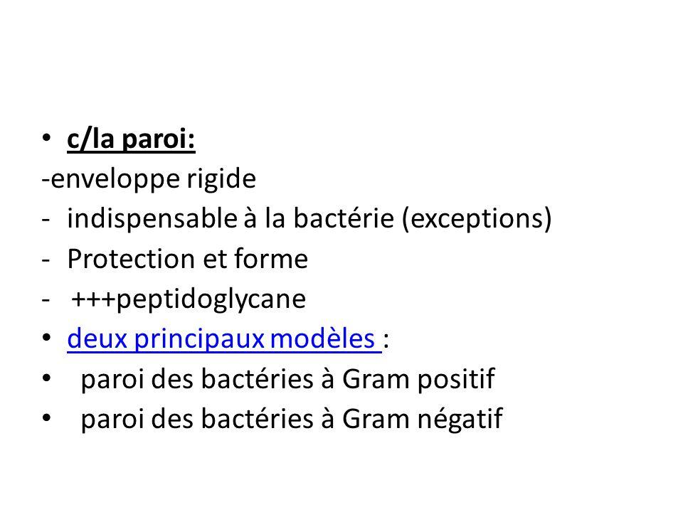 c/la paroi: -enveloppe rigide -indispensable à la bactérie (exceptions) -Protection et forme - +++peptidoglycane deux principaux modèles : deux principaux modèles paroi des bactéries à Gram positif paroi des bactéries à Gram négatif