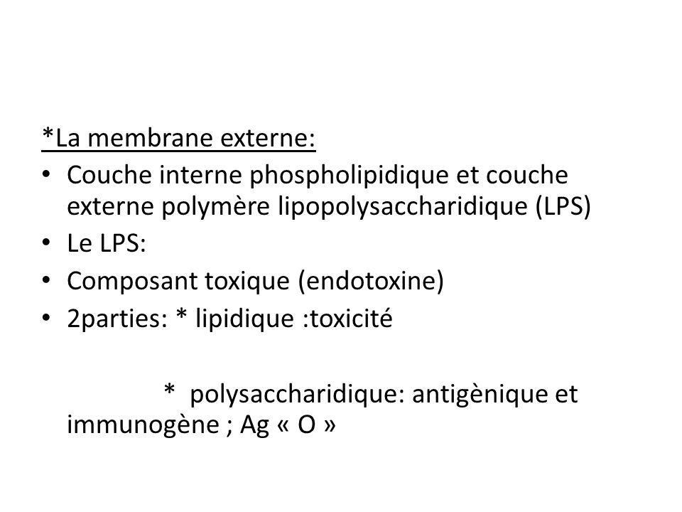 *La membrane externe: Couche interne phospholipidique et couche externe polymère lipopolysaccharidique (LPS) Le LPS: Composant toxique (endotoxine) 2parties: * lipidique :toxicité * polysaccharidique: antigènique et immunogène ; Ag « O »