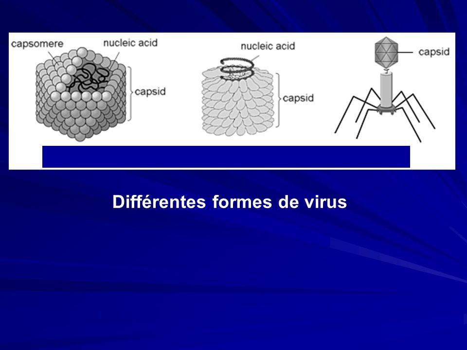 Différentes formes de virus