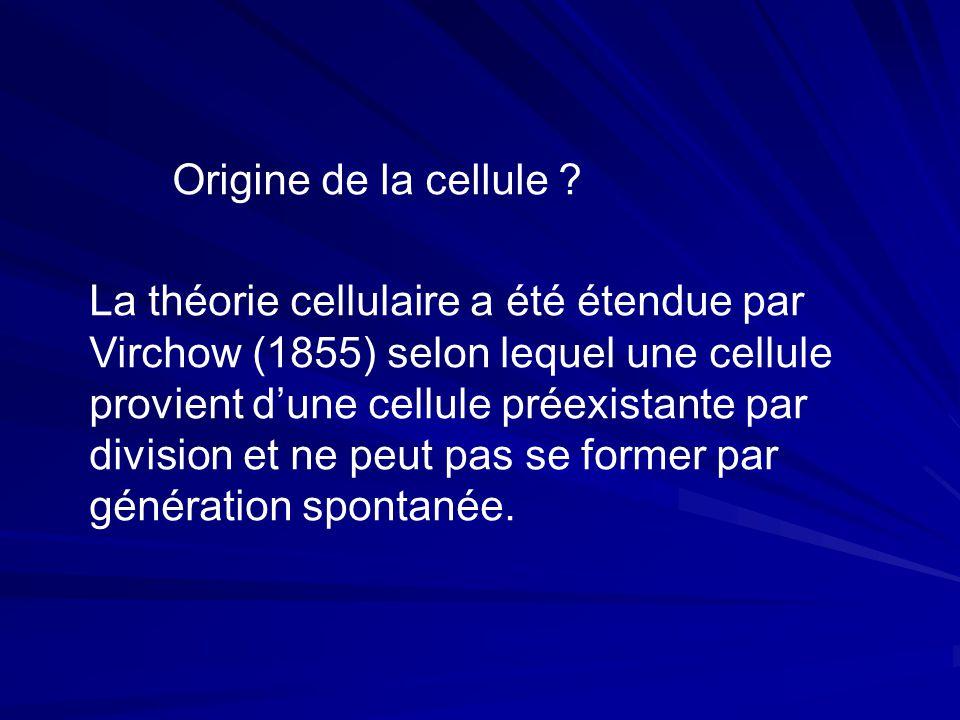 La théorie cellulaire a été étendue par Virchow (1855) selon lequel une cellule provient d'une cellule préexistante par division et ne peut pas se former par génération spontanée.
