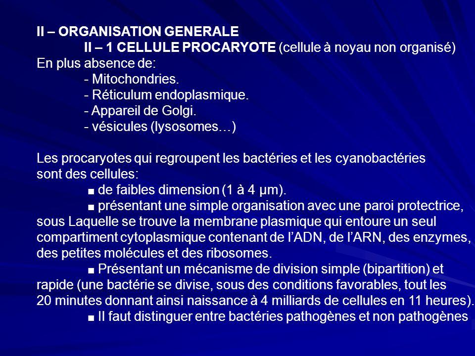 II – ORGANISATION GENERALE II – 1 CELLULE PROCARYOTE (cellule à noyau non organisé) En plus absence de: - Mitochondries.