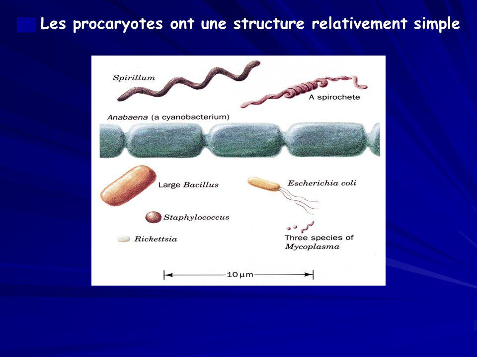 a. Les procaryotes ont une structure relativement simple