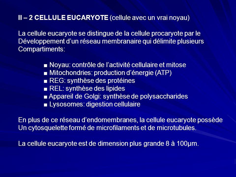 II – 2 CELLULE EUCARYOTE (cellule avec un vrai noyau) La cellule eucaryote se distingue de la cellule procaryote par le Développement d'un réseau membranaire qui délimite plusieurs Compartiments: ■ Noyau: contrôle de l'activité cellulaire et mitose ■ Mitochondries: production d'énergie (ATP) ■ REG: synthèse des protéines ■ REL: synthèse des lipides ■ Appareil de Golgi: synthèse de polysaccharides ■ Lysosomes: digestion cellulaire En plus de ce réseau d'endomembranes, la cellule eucaryote possède Un cytosquelette formé de microfilaments et de microtubules.