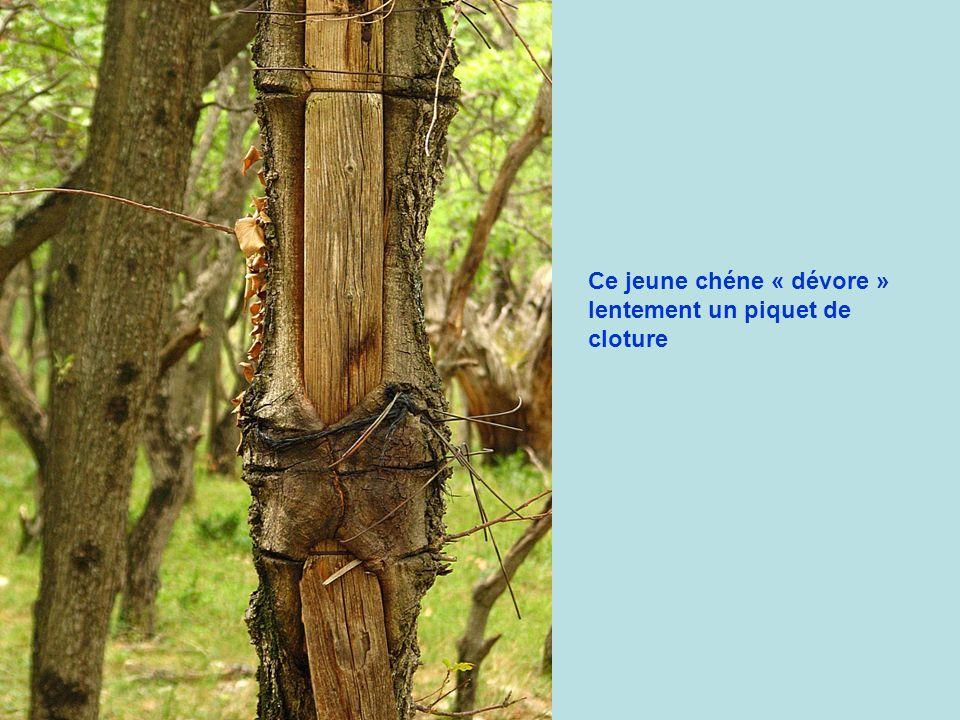 Entre la Baume et les Auberts ( Col de la Chaudiére )