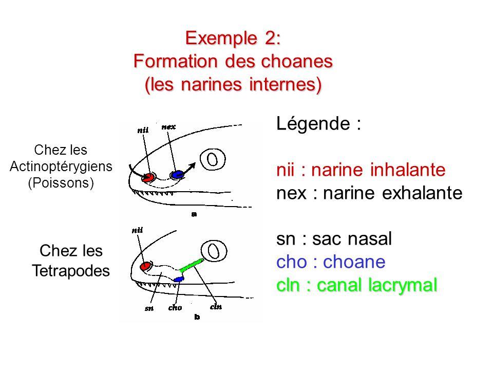 Exercice 2: Exercice 2: Proposer un cladogramme pour les espèces suivantes A B C D E