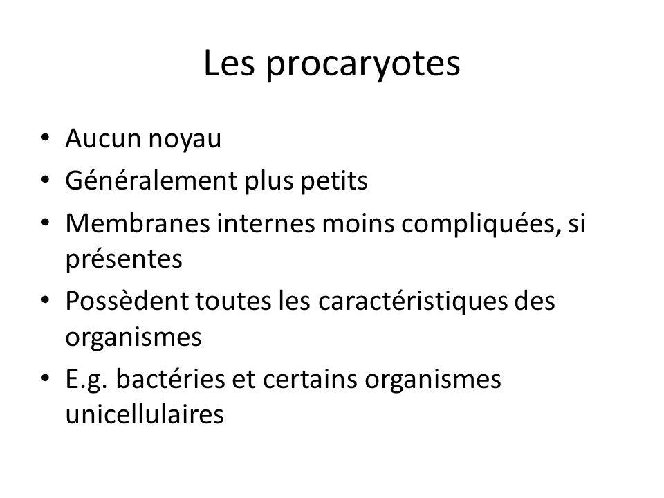Procaryote Typique