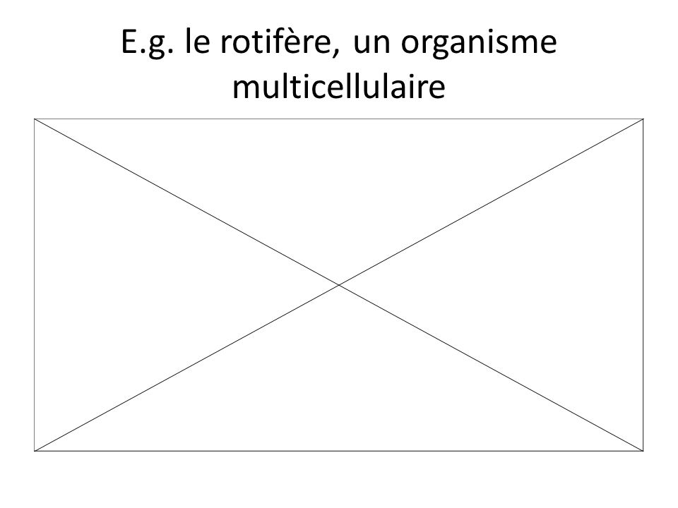 Eucaryote typique