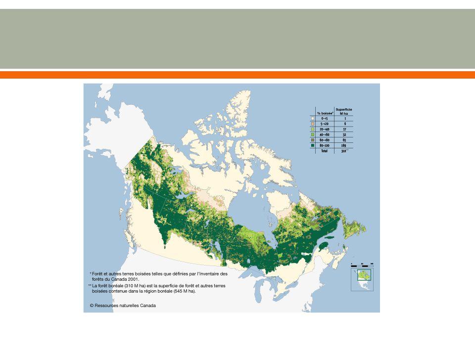  Une zone de transition entre les terres arides des prairies et les régions des forets de conifères du Nord.
