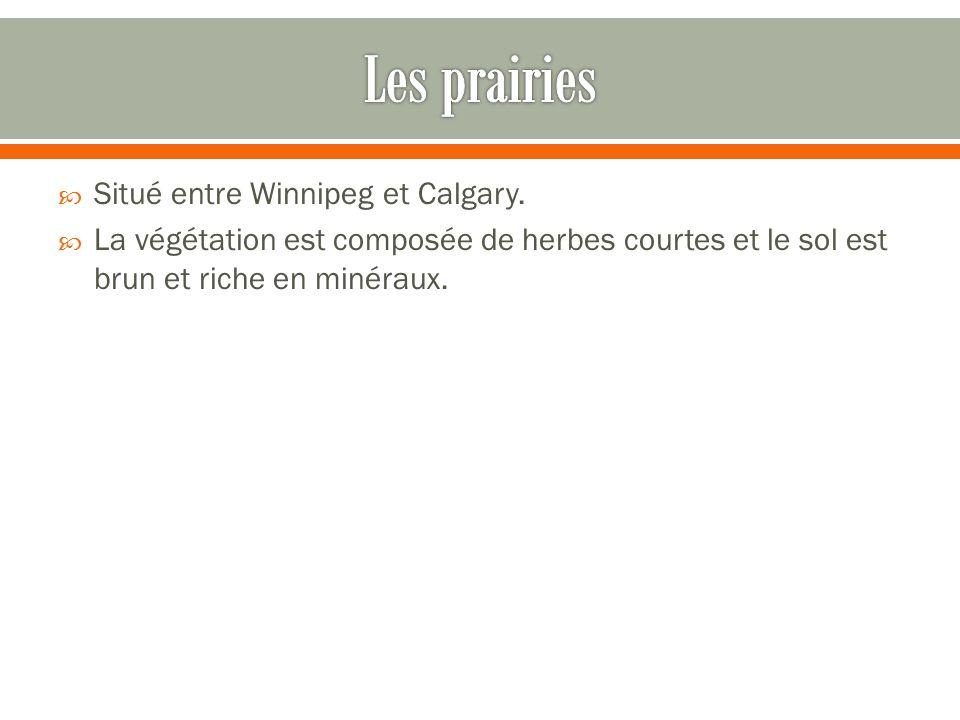  Situé entre Winnipeg et Calgary.