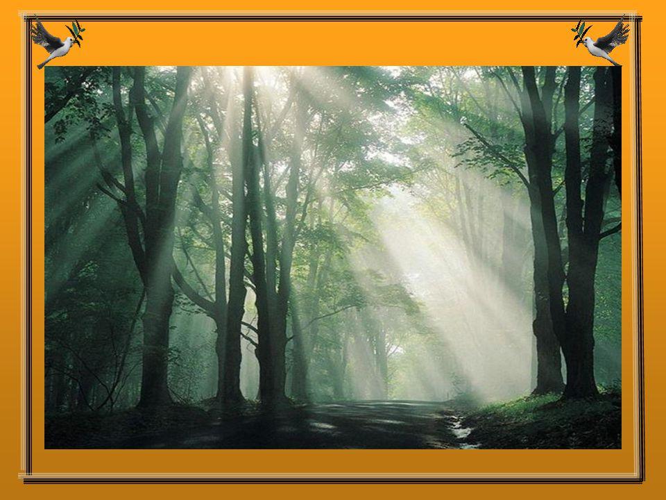Un jour, il y a quelque temps, un homme, qui était très triste, marchait dans les bois.
