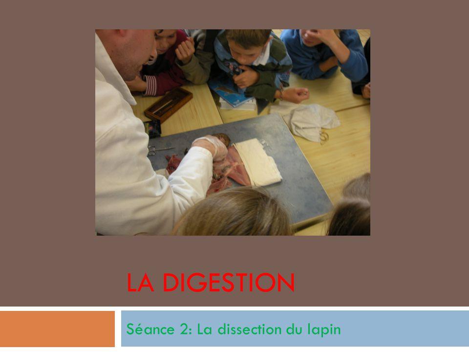 Les outils pour disséquer Gants Planche à dissection Ciseaux Pinces Chiffon